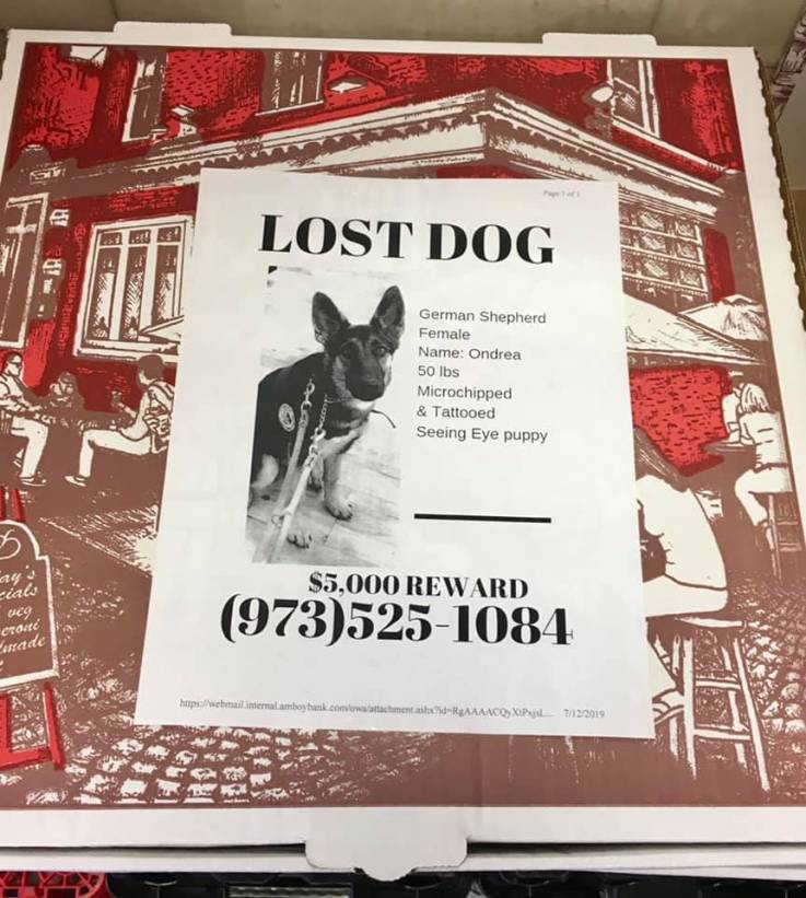 angelo's pizza in new jersey puts flyers on pizza boxes for missing dogs and cats