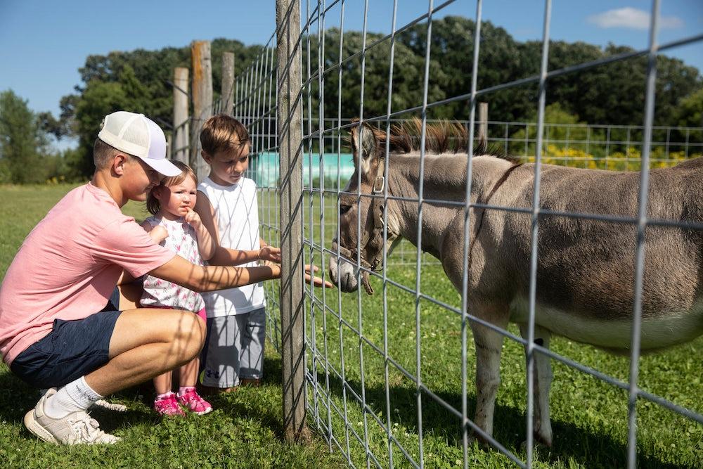 This photo shows children feeding a donkey at Pleasant Grove Pizza Farm