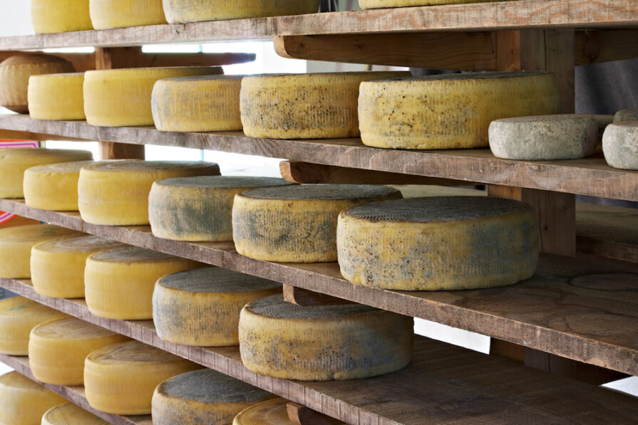 this photo shows asiago cheese aging in a factory